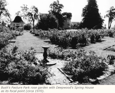 bush_rose_garden