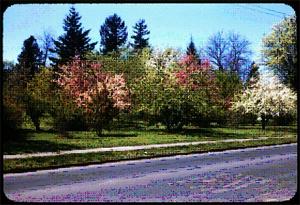 flowering_trees