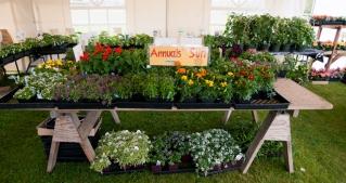 Plant Sale 980x520
