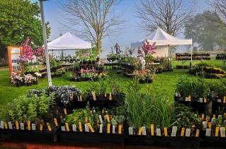 Plant sale 5
